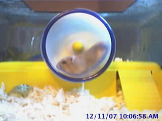 Hamstercam photo 2