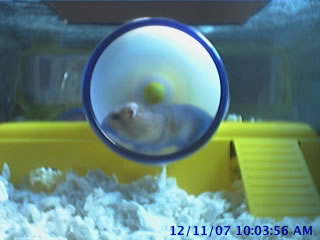 Hamstercam photo 1