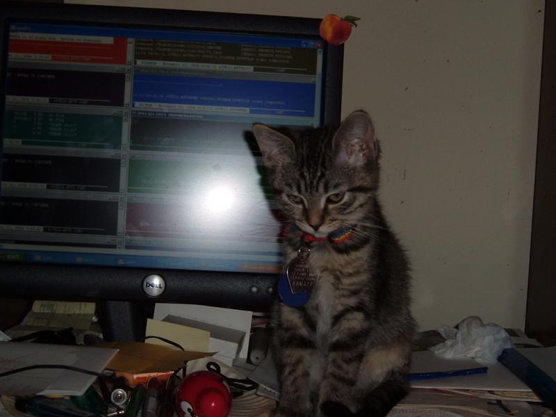 spoiled cat webcam photo 4