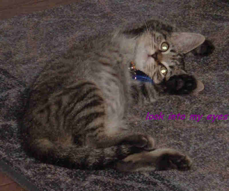 spoiled cat webcam photo 3