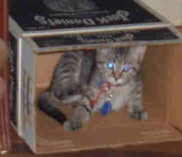 spoiled cat webcam photo 2