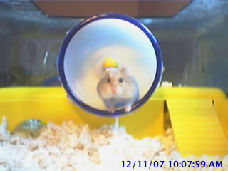 Hamstercam photo 3
