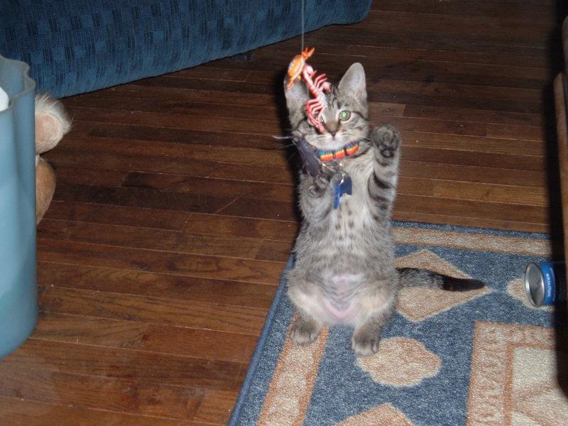 spoiled cat webcam photo 1