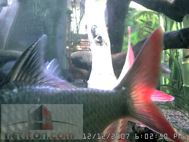 Aquarium Cam in New Jersey photo 2