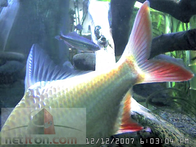 Aquarium Cam in New Jersey photo 4