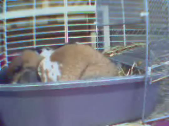 Bunny wecam photo 2