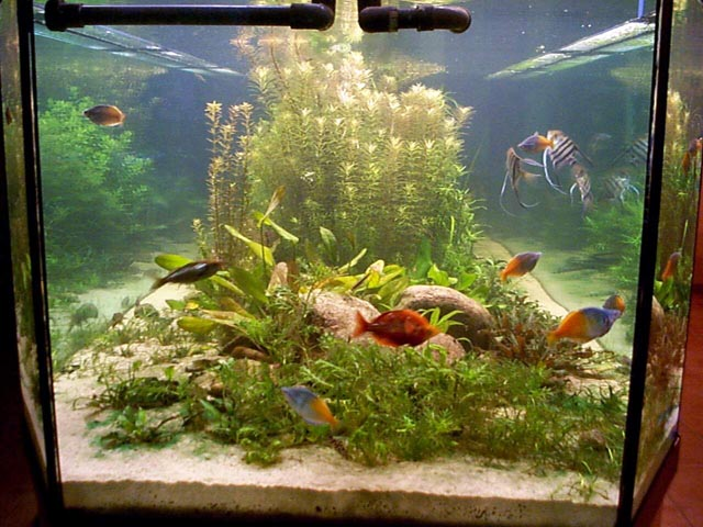 Aquarium fish photo 1