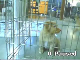 PuppyCam  photo 1