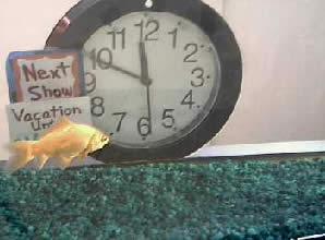 Fish School Webcam photo 3