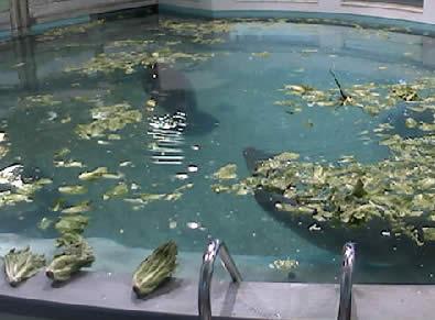 Parker Manatee Aquarium photo 2