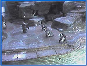 Penguin Cam photo 2