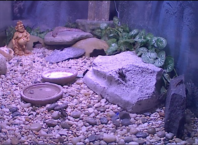 Leopard Gecko Cam photo 2