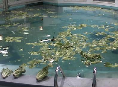 Parker Manatee Aquarium photo 1