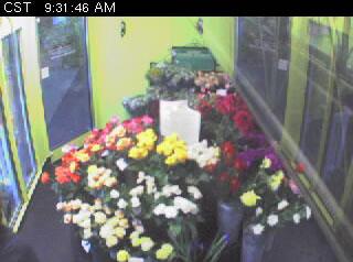 Flower Cam photo 3