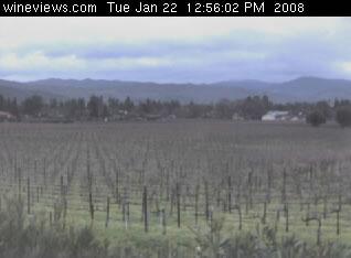 Vineyard View photo 1