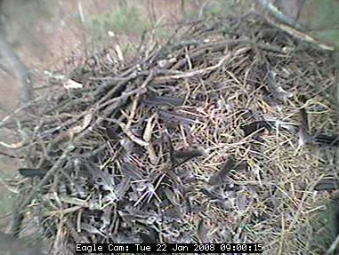 WildCam  photo 3