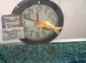 Fish School Webcam photo 2