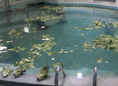 Parker Manatee Aquarium photo 3