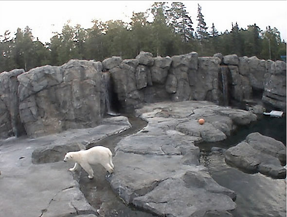 Polar Bear Cam photo 3