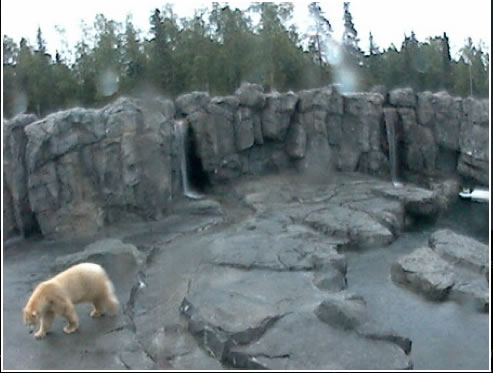 Polar Bear Cam photo 2