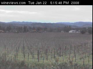 Vineyard View photo 2