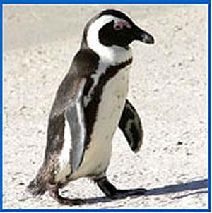 Penguin Cam photo 1