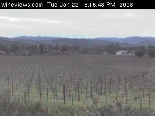 Vineyard View photo 3