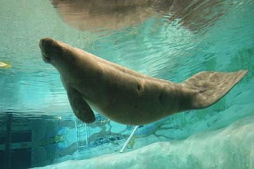 Parker Manatee Aquarium WebCam photo 1