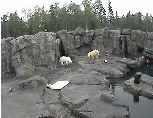 Polar Bear Cam photo 1