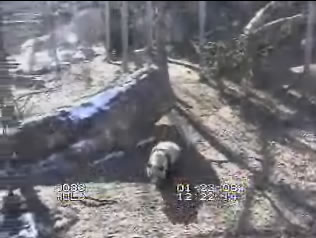 Giant Panda webcam photo 2