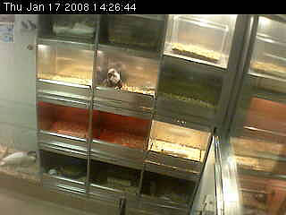Pets store WebCam photo 1