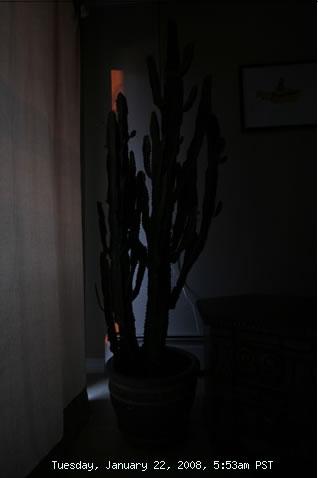 Cactus Cam photo 1