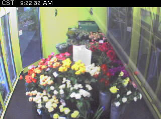 Flower Cam photo 1