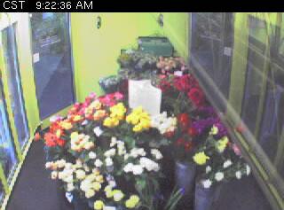 Flower Cam photo 1