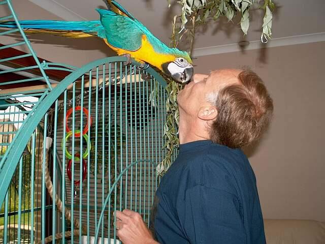 Parrot Cam photo 2