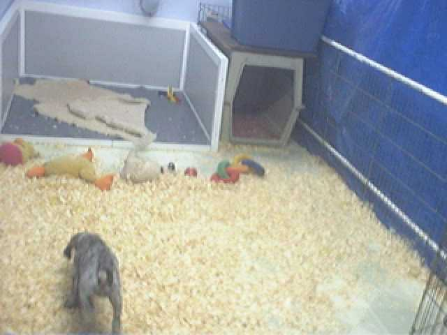 Buck Hollow Puppycam photo 1