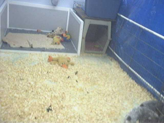 Buck Hollow Puppycam photo 2