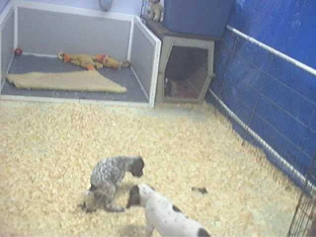 Buck Hollow Puppycam photo 5