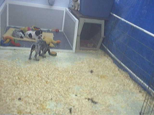 Buck Hollow Puppycam photo 6
