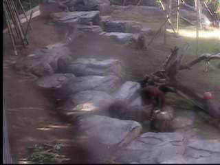 San Diego Zoo photo 5