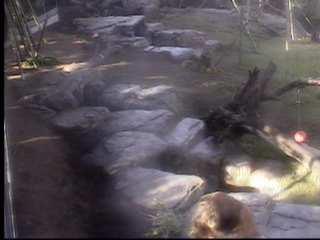 San Diego Zoo photo 4