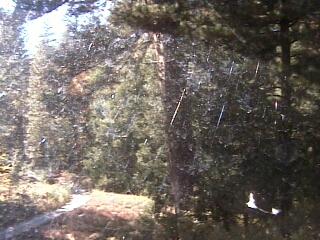 James Reserve - Robotic Camera photo 6