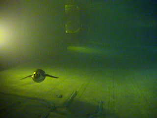 New England Aquarium - Underwater Penguin photo 1