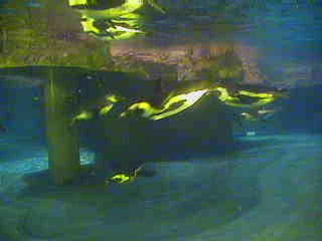 New England Aquarium - Underwater Penguin photo 5