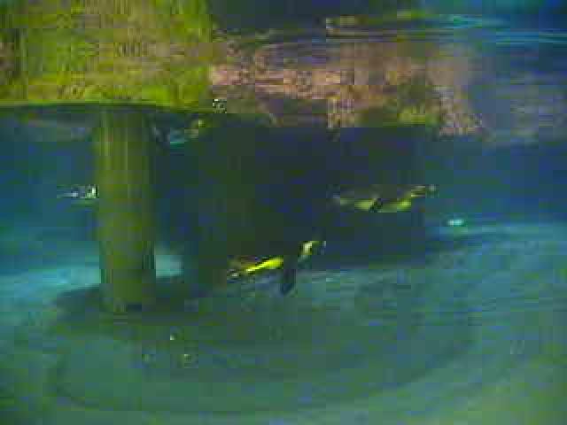 New England Aquarium - Underwater Penguin photo 3