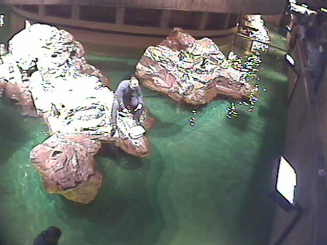 New England Aquarium - Penguin photo 6