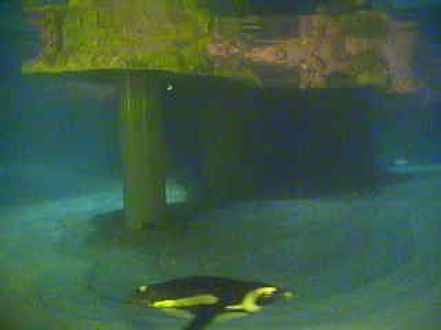 New England Aquarium - Underwater Penguin photo 6