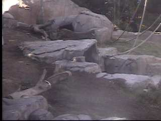 San Diego Zoo photo 1