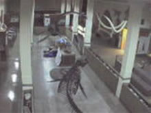 Museum of Geology - Dino Cam photo 3