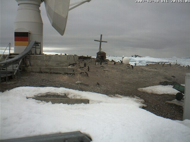 Penguin Cam photo 1